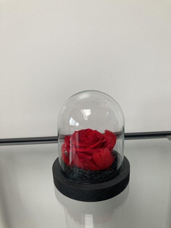 Rose unique sous dôme avec led