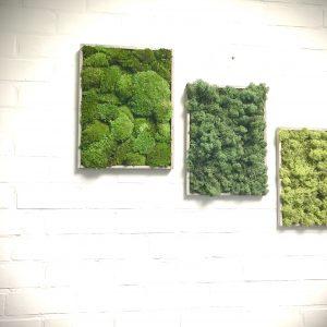 Lot de 3cadres rectangle  décoration végétale stabilisé
