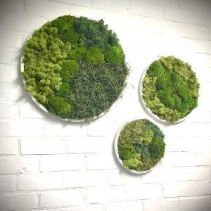 Lot de cadres blancs cylindriques décoration végétaux stabilisés
